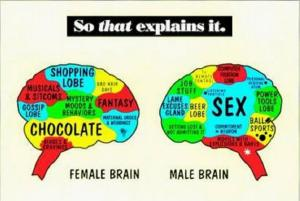 Sex differences in the brain explained