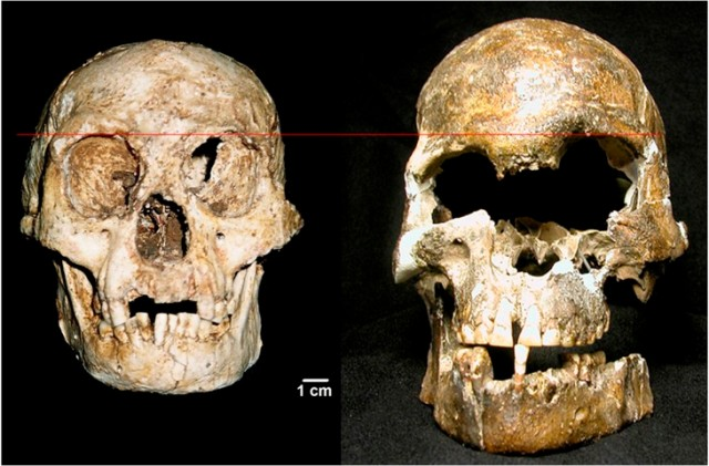 This figure compares the skull of LB1 to that of Liang Momer E, another skull from Flores, dated in the range of 3000 to 5000 years ago.